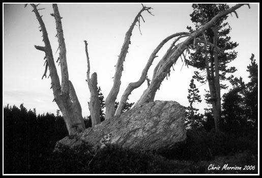 Rock and Dead Trees...one of my favorites...