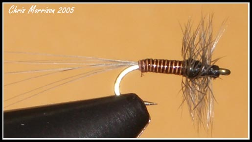 Red Belly Midge #26