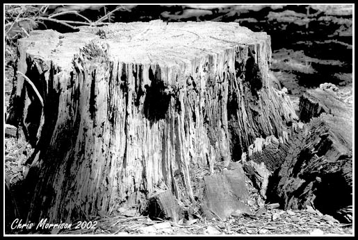 Random stump with nice textures and contrast.
