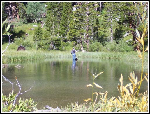 Me casting to rising brookies and browns in the back water of a high elevation pond.