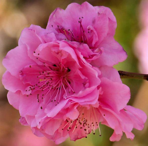 Cherry Jubilee--f/5.6; 1/320; ISO 200