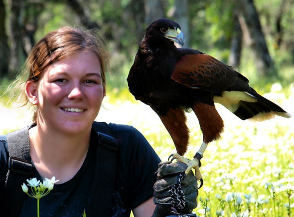 Kaylee and a Harris Hawk