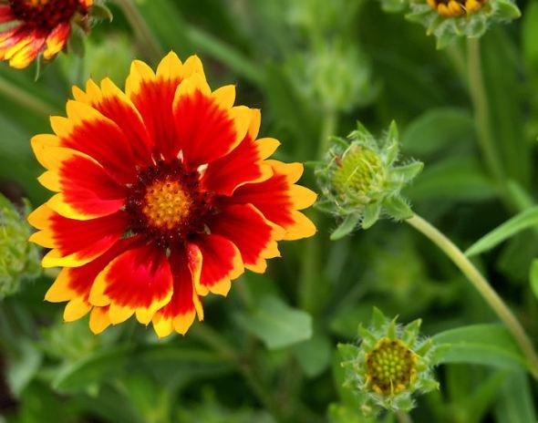 solitary-flower