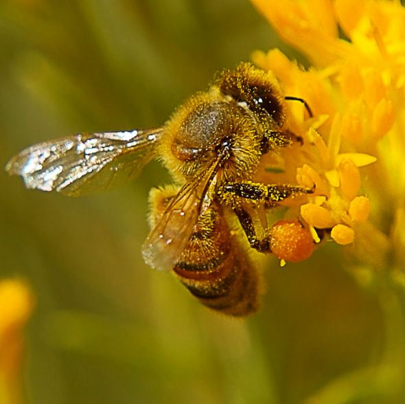 Bee Square