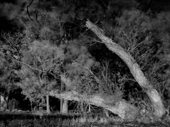 Spooky Tree Front1