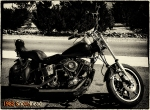 1982 Shovelhead Custom Rigid.  She will be mine.  VERY soon...